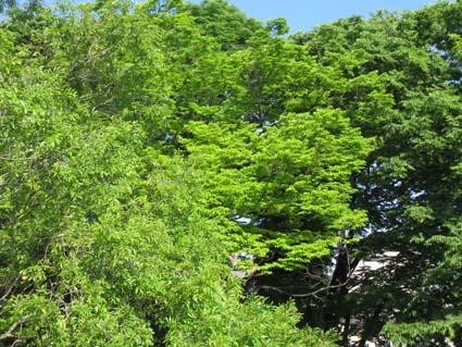 11 花壇IMG_2191.jpg