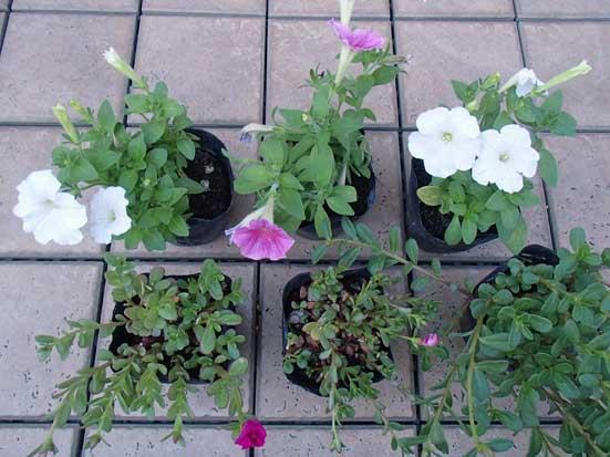 花壇15P9110449.jpg